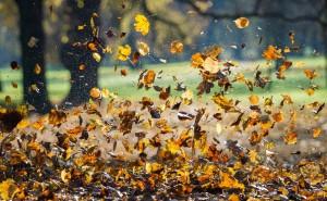 Mit Blättern benötigt der Baum mehr Wasser als ohne. Deswegen muss er die Blätter am Ende des Herbstes loswerden. (Foto: dpa)