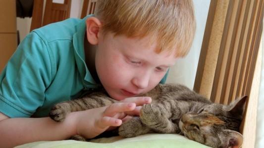 Eine Katze als Haustier – Darauf musst du achten