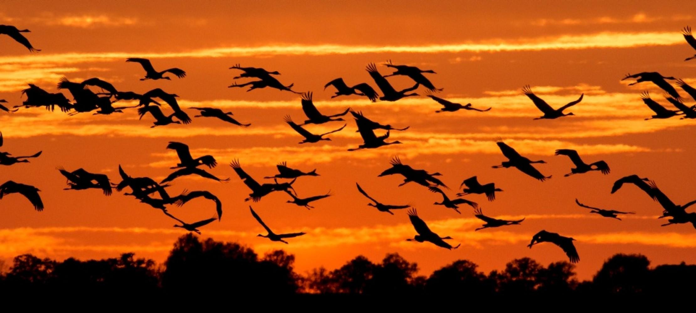 the best attitude fb14a ed266 Zugvögel machen sich auf in den Süden | Duda.news
