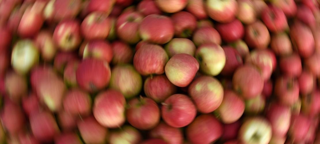 Mhhhh... Lecker! Und auch gesund: In einem Apfel stecken viele Vitamine und Mineralstoffe wie Phosphor, Kalzium, Magnesium und Eisen. (Foto: dpa)