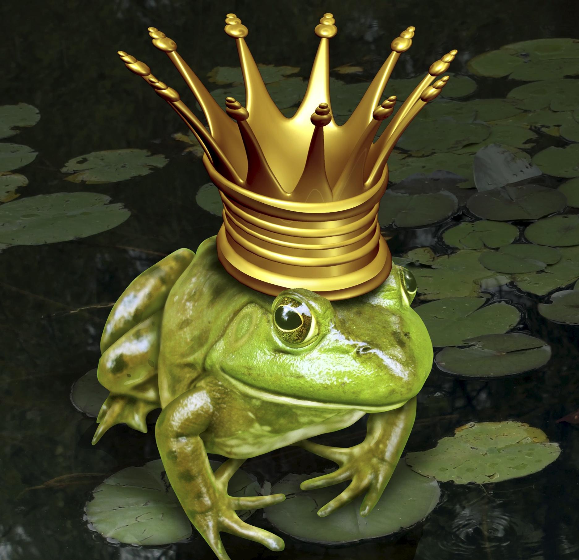 Жаба в короне картинки