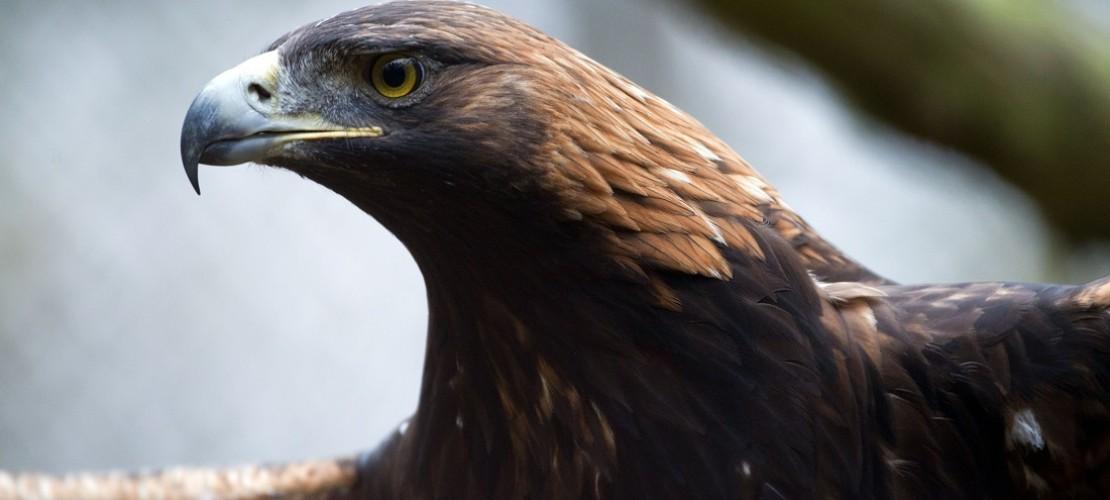 Den Adler findest du auch auf vielen Wappen. Der Vogel steht für Macht. (Foto: dpa)