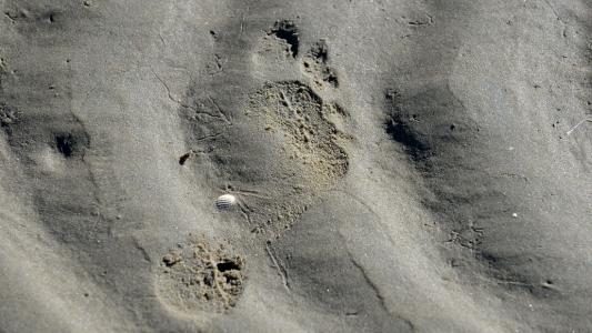 Was ist ein ökologischer Fußabdruck?