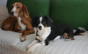 Dicke mit den Menschen: Hunde (Foto: dpa)