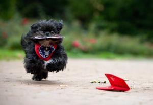 Hunde haben öfters Bock auf Tricks. (Foto: dpa)