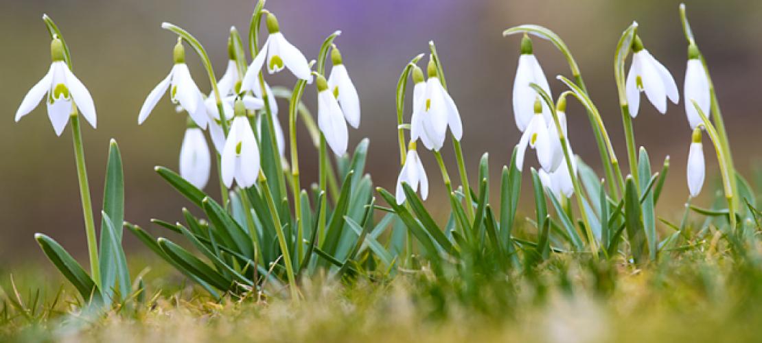 Der Frühling beginnt