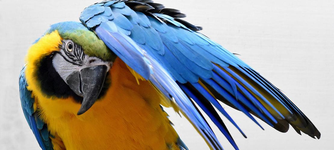Großes Vogelzählen im Zoo
