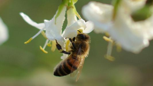 So baust du ein Hotel für Bienen