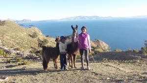 Neben Eseln gibt es auch Lamas auf der Insel. (Foto: dpa)