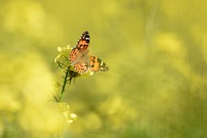 Die richtigen Pflanzen locken Schmetterlinge an. (Foto: dpa)