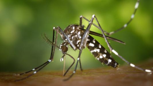 Wie wird Zika übertragen?