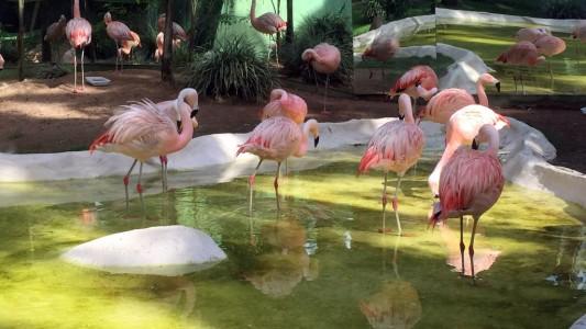 Deutscher Zoo in Brasilien