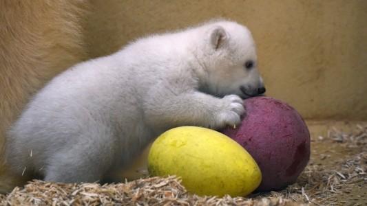 Spielstunde für Eisbärbaby