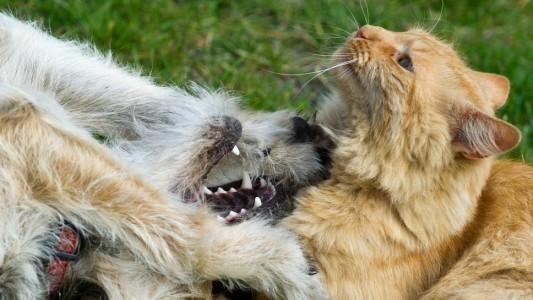 Haustier-Tausch in den Ferien