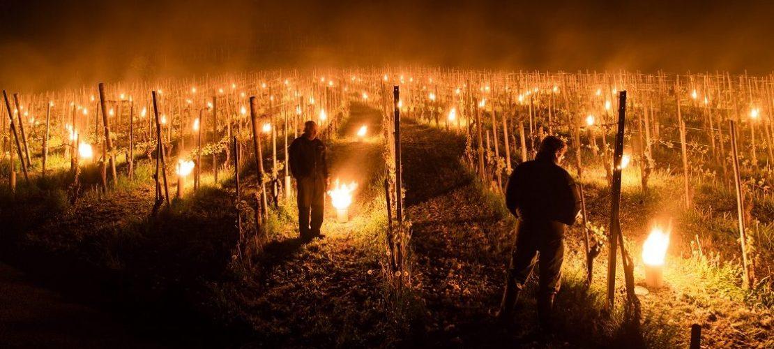 Kerzen im Weinberg