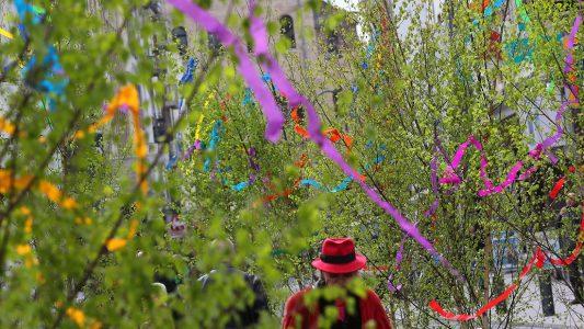 Dünne Bäumchen mit buntem Schmuck: 1. Mai ohne Maibäume - kaum vorstellbar in Köln! (Foto: dpa)