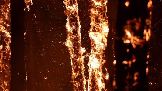 Wie entstehen Waldbrände?