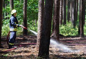 Der Wald braucht lange, um sich von dem Feuer zu erholen. (Foto: dpa)