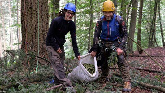 Zapfenpflücker sorgen für neue Bäume