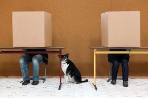 Wahlen in einer Demokratie sind geheim - deswegen machen Bürger ihr Kreuzchen hinter einem solchen Sichtschutz. (Foto: dpa)