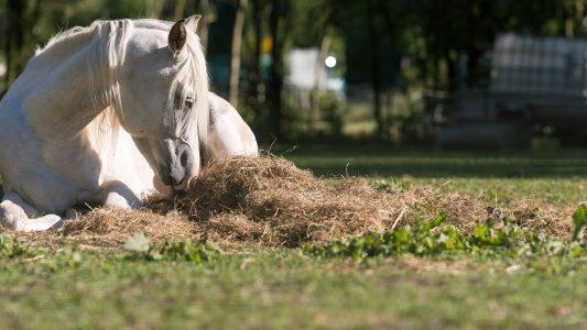 Klick-Tipp: Alles über Ponys