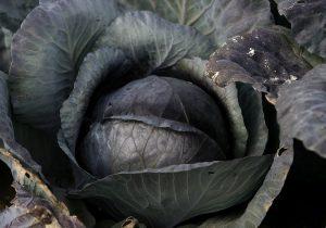 So sieht das Gemüse auf dem Feld aus. (Foto: dpa)