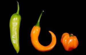 Und diese drei sehen unterschiedlich aus - aber sie sind alle Chilies. (Foto: dpa)