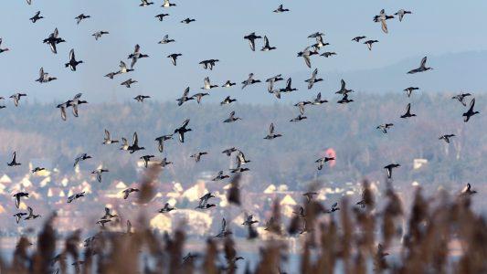 Was ist Vogelgrippe?