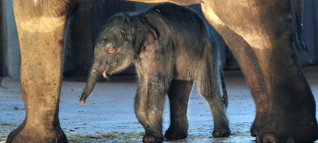 Die Babys im Elefantenpark kann Helena stundenlang beobachten. (Foto: dpa)