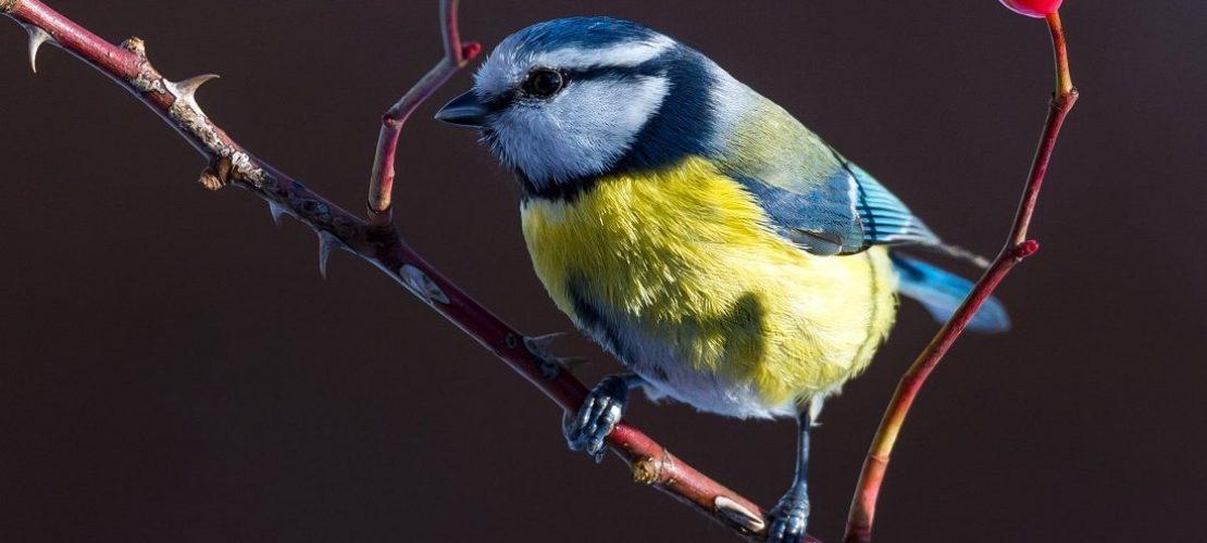 Vögel zählen wie ein Forscher
