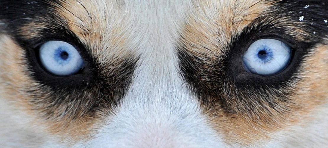 Warum darfst du Hunden nicht in die Augen sehen?
