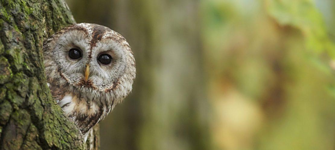 Raus hier: Große Vögel und andere Abenteuer