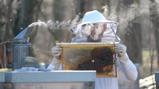 Warum räuchern Imker Bienen ein?