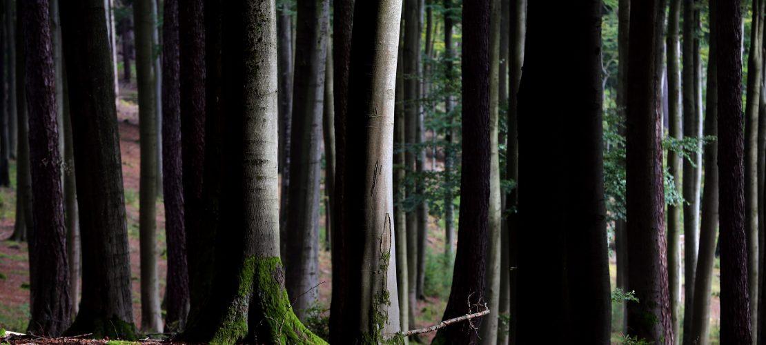 Warum sind Bäume besonders?