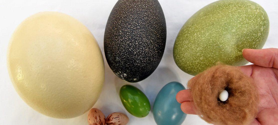 Darum sind Eier Wunder der Natur