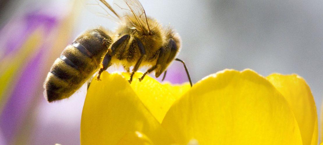Duda - Deine Zeitung war den Bienen auf der Spur. (Bild: dpa)