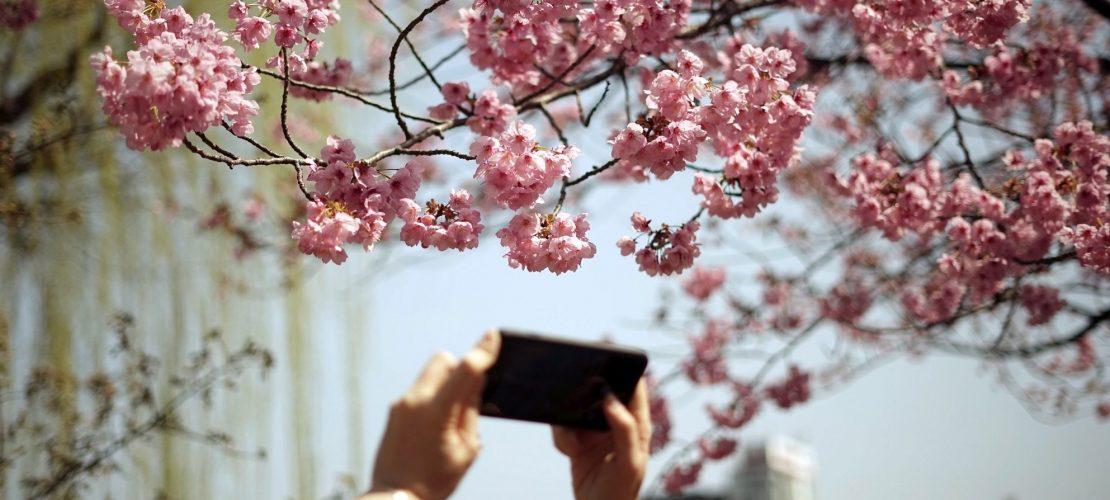 Der Frühling kommt in Rosa