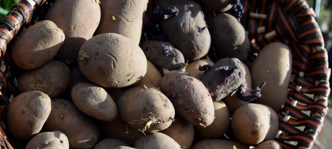 Woher kommt die Kartoffel?