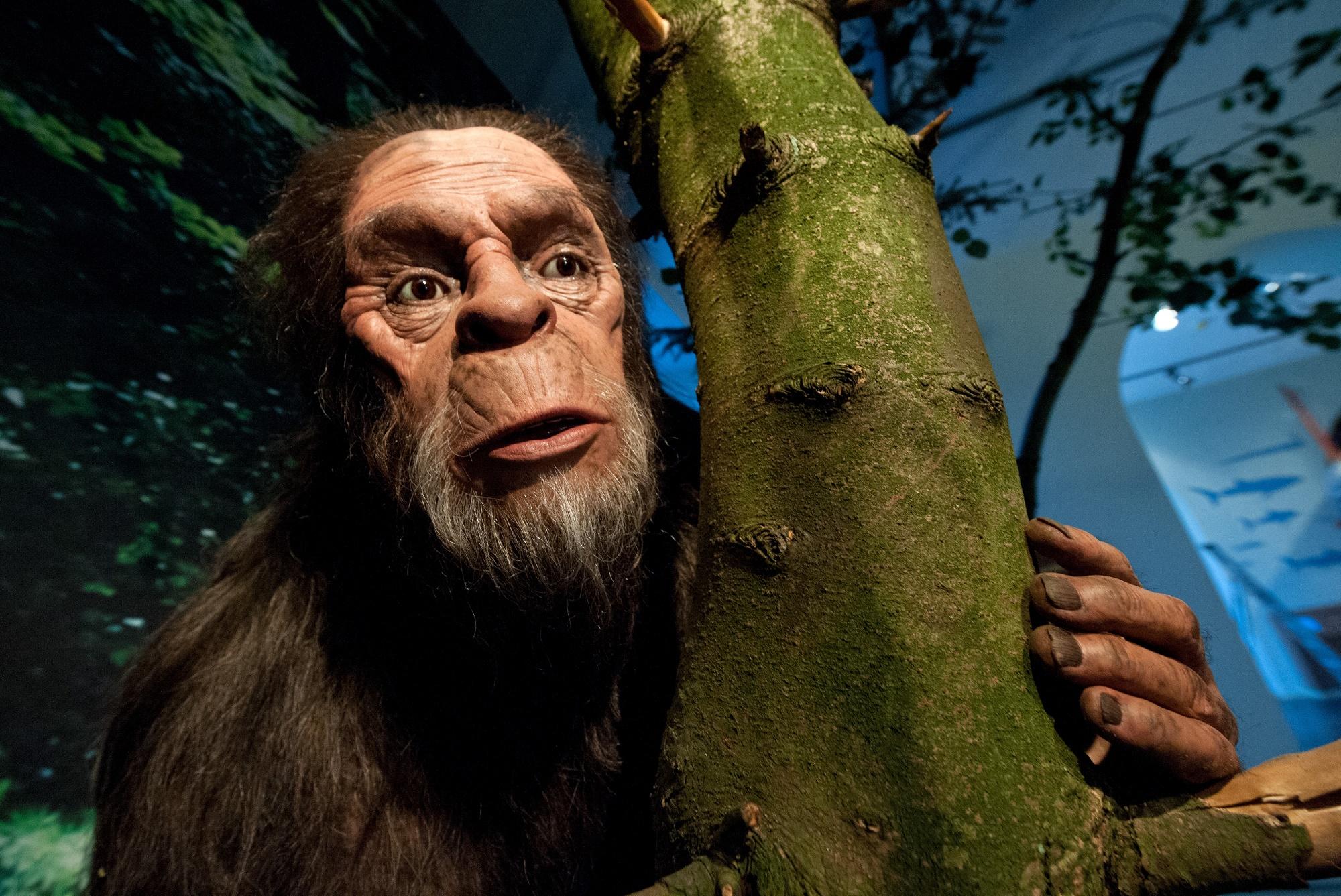 Gibt Es Bigfoot Wirklich