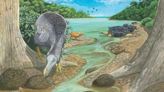 Wie lebte der Dodo?