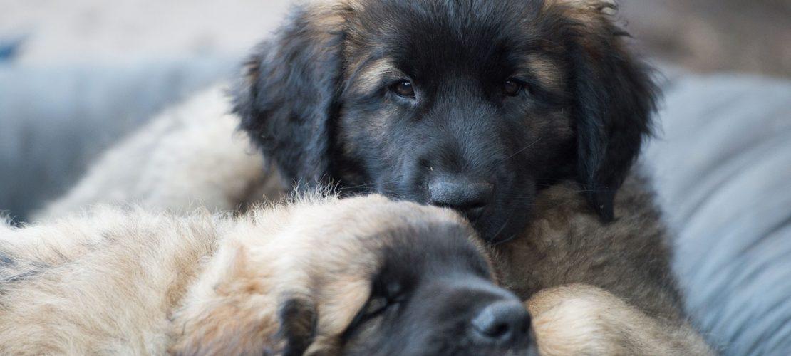 Lese-Tipp: Fünf tolle Hundebücher!