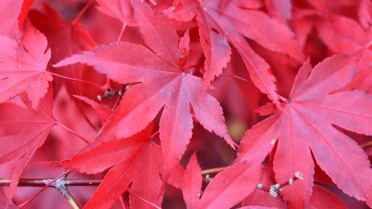 Was passiert im Herbst in der Natur?