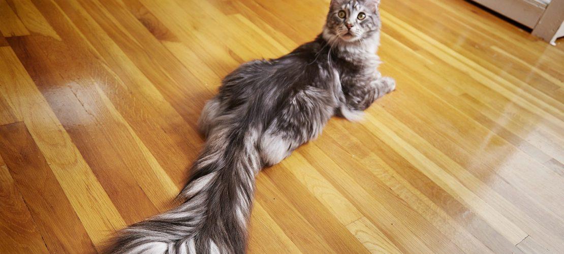 Katzen stellen Rekorde auf