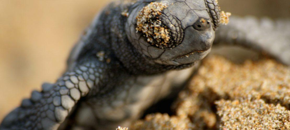Schildkröten geht es besser!