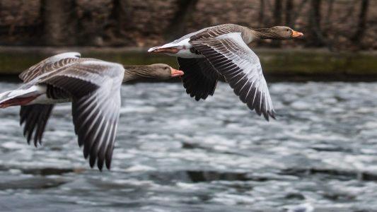 Wie finden Zugvögel ihren Weg?