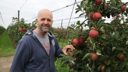 So werden Äpfel angebaut