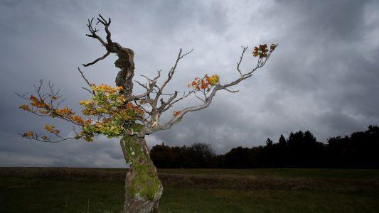 So verraten Bäume die Himmelsrichtung