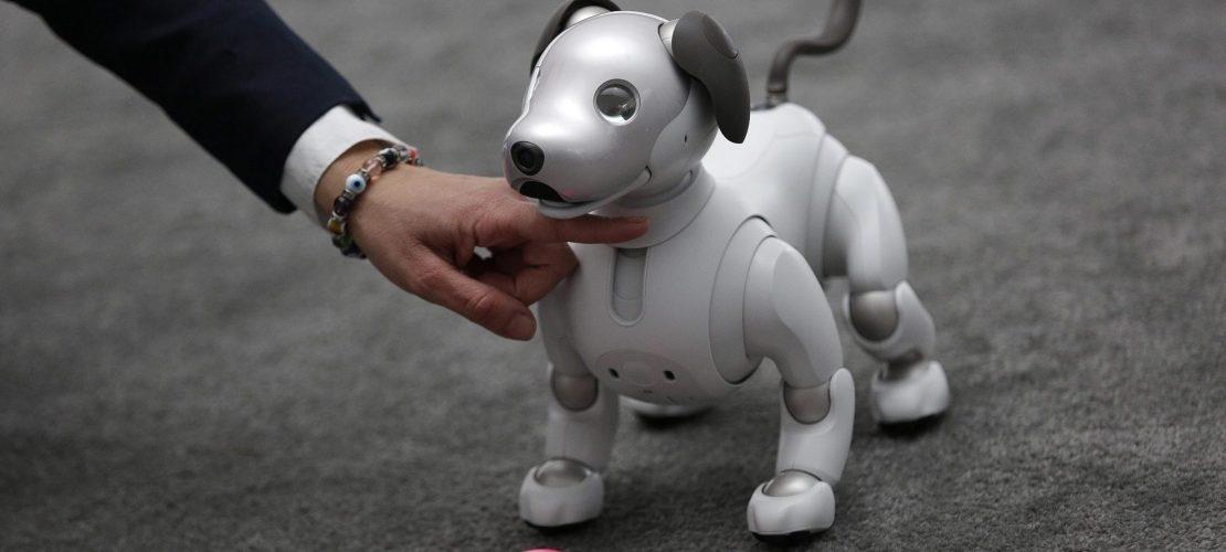 Roboterhund muss noch lernen