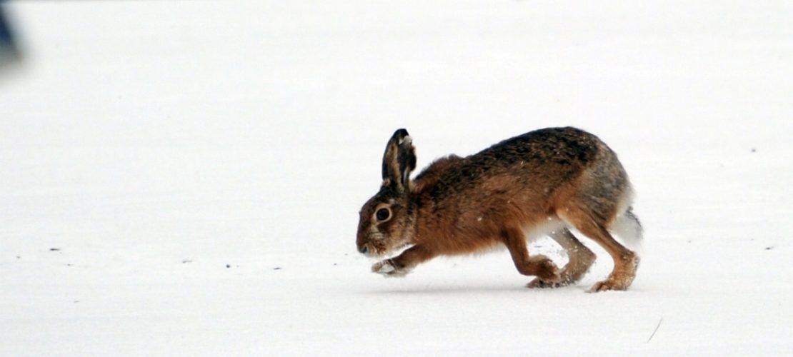 Wie überstehen Pflanzen und Tiere den Winter?