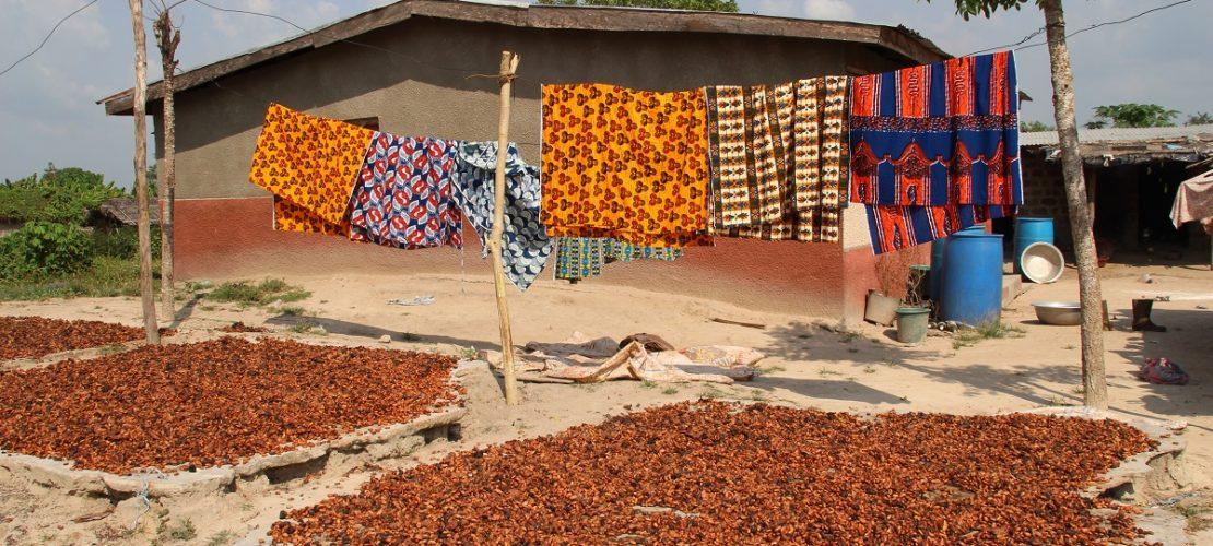 Im Dorf Affiakounou im Süden der Elfenbeinküste trocknen Kakaobohnen zwischen den Häusern in der Sonne. Die Kakao-Bohnen müssen gut trocknen. (Foto: dpa)